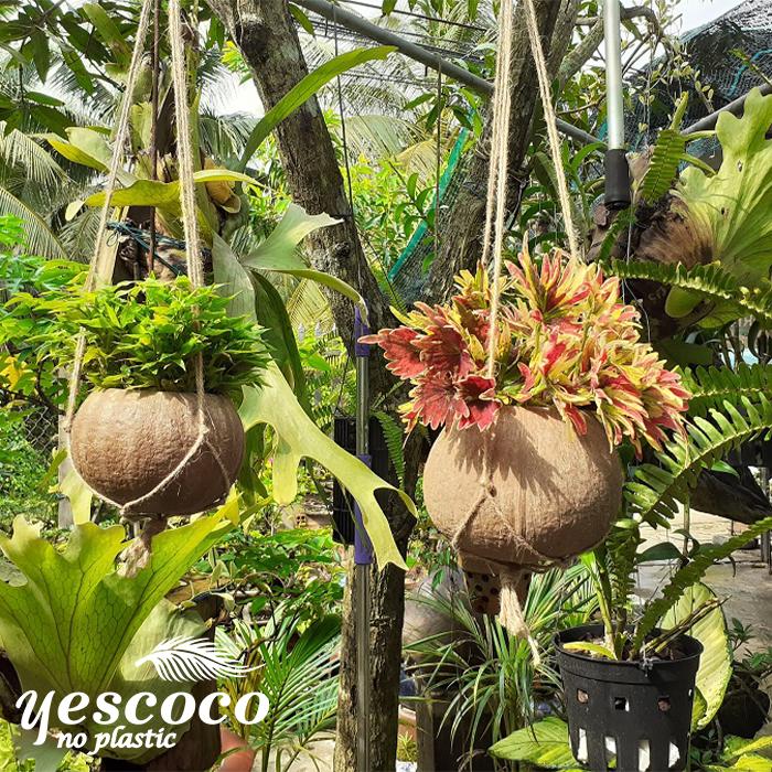Chậu trồng cây treo ban công  gáo dừa xơ vàng dây đan