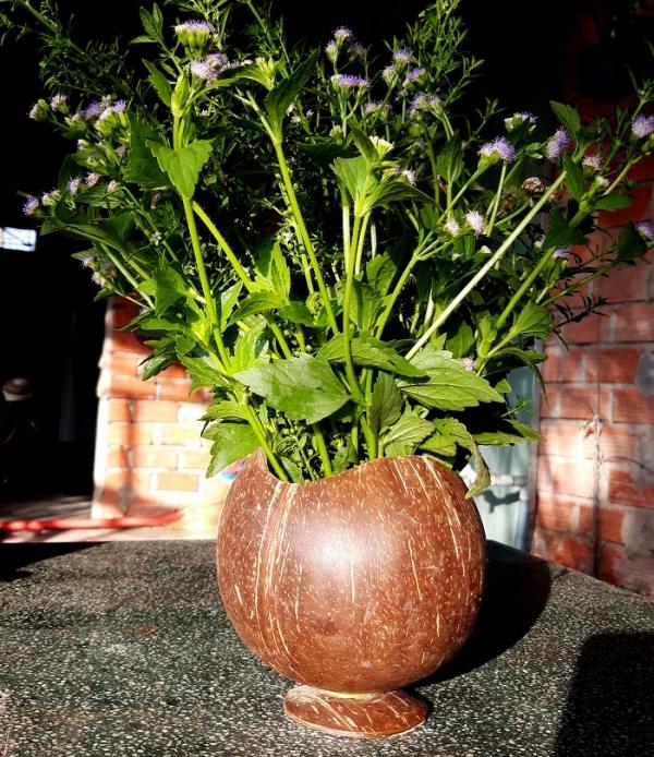 Bình cắm hoa gáo dừa