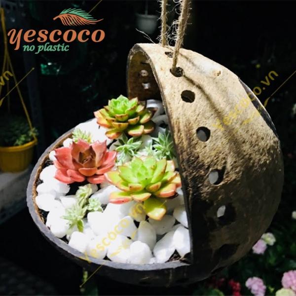 Chậu Ếch Treo Gáo Dừa